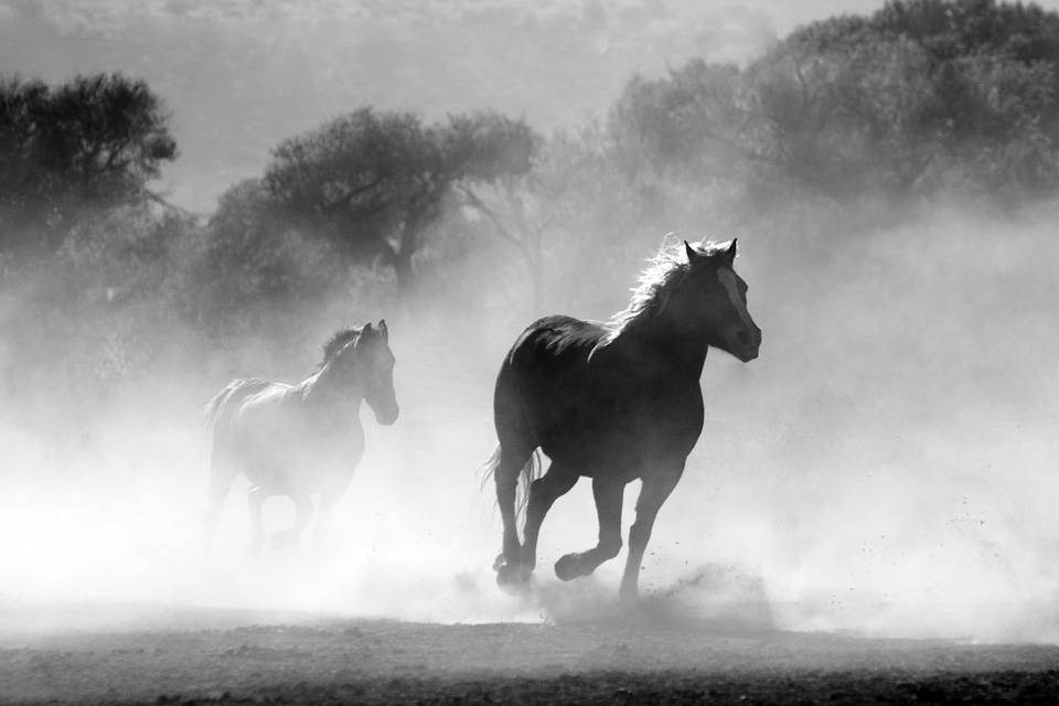 wild horse - dee stone blog